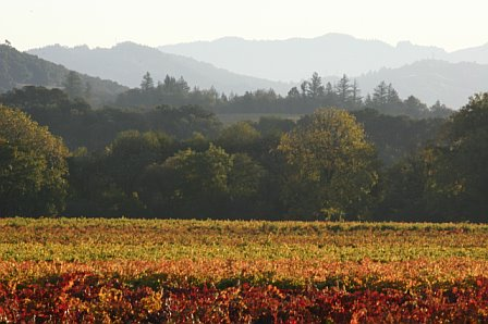 Vineyard-fall-1