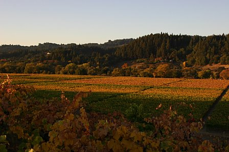 Vineyard-fall-4